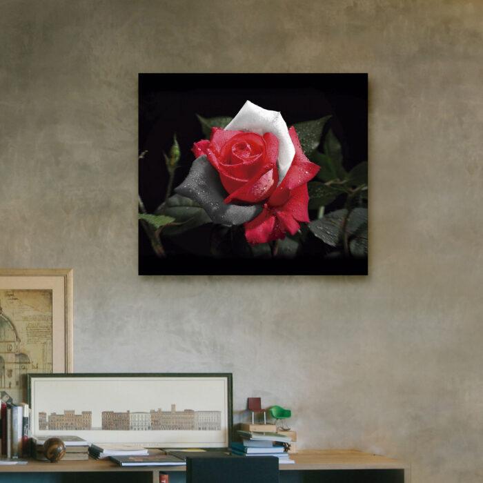 Rosa Blanco y Negro (40cm x 35cm)
