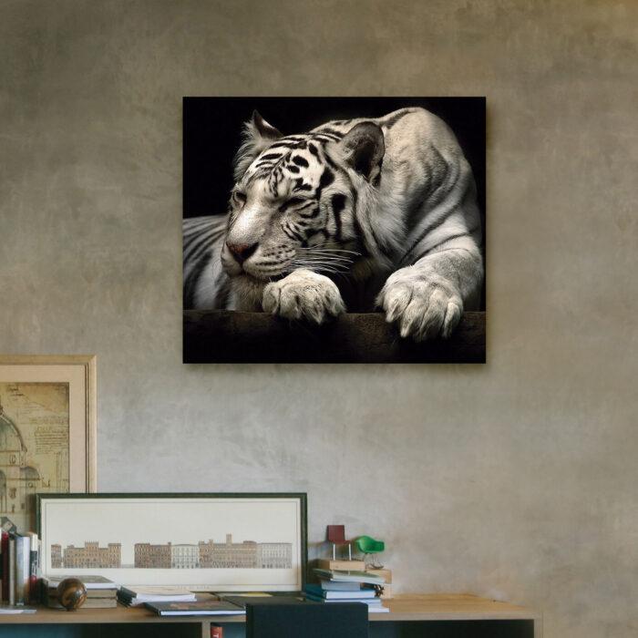 Tigre de Bengala Descansando (40cm x 35cm)