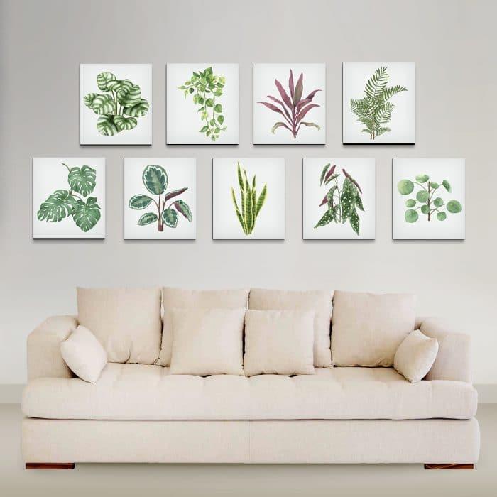 Plantas copia